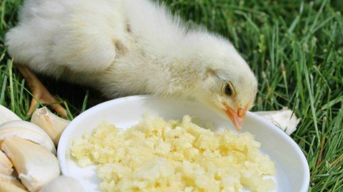 Toltavet 2,5%, soluție p/u apă potabilă - preparat contra viermilor paraziți la păsări - Mobedco