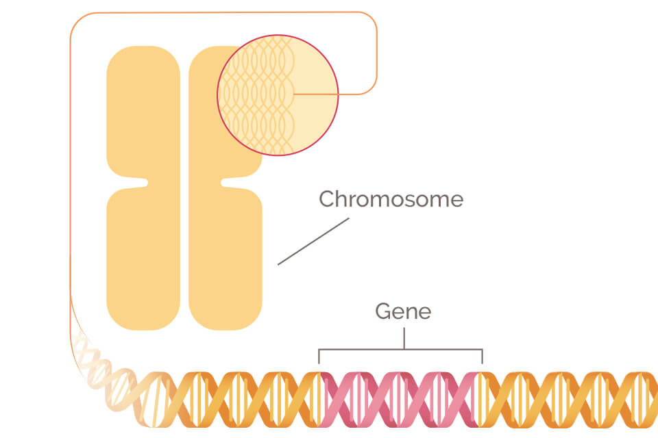 genetic cancer brca