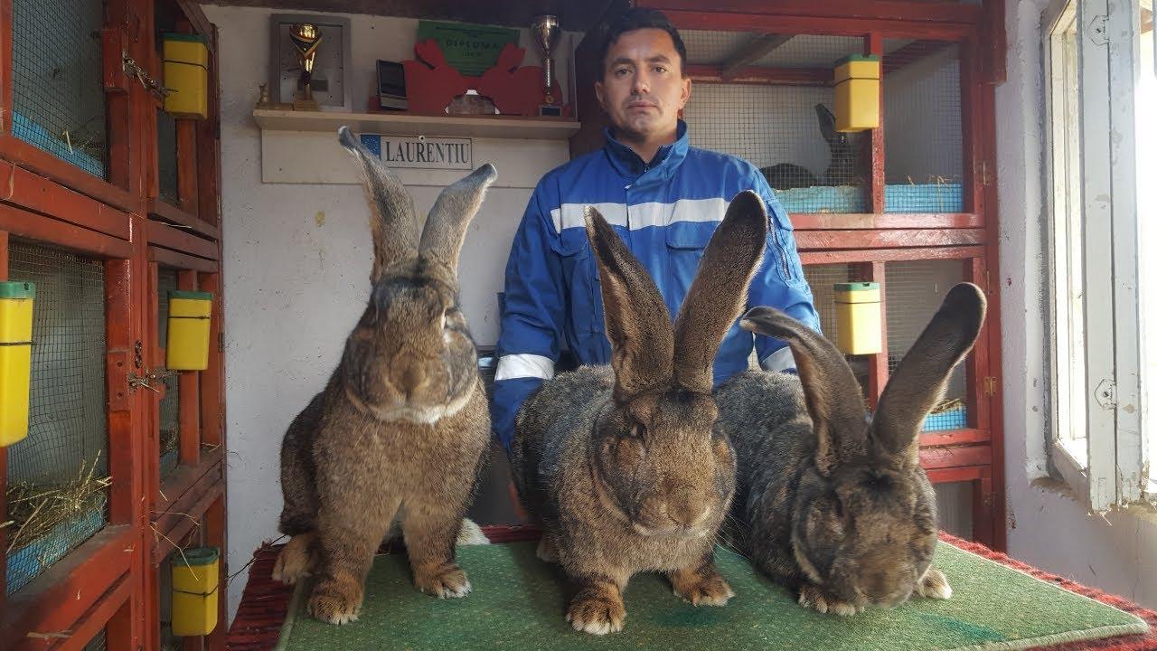 COMENTARIU Lelia Munteanu: Vânătoarea de iepuri - o anecdotă irakiană