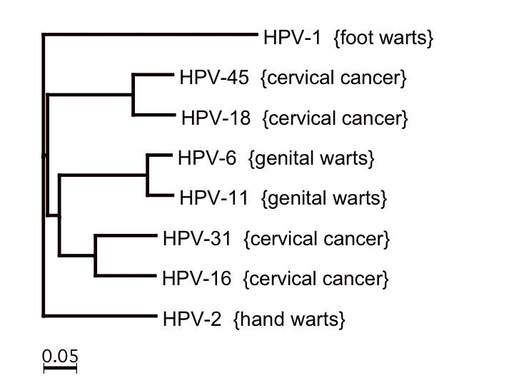 hpv types genital warts lesioni papilloma virus bocca