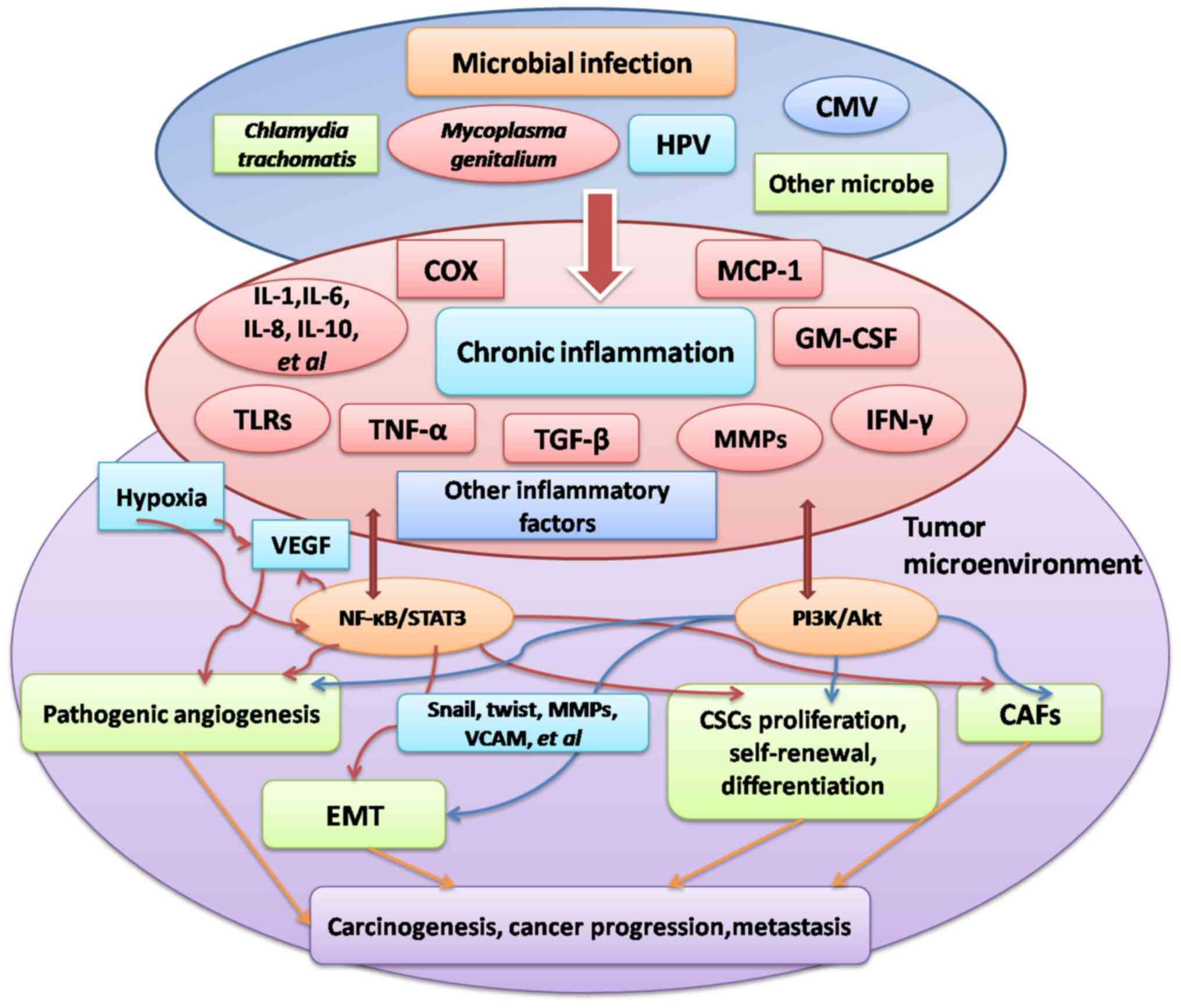 hpv virus and ovarian cancer virus del papiloma cuanto tarda en aparecer