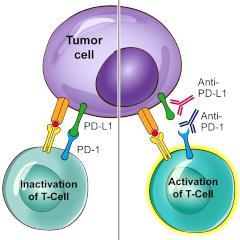 L immunotherapie cancer colorectal
