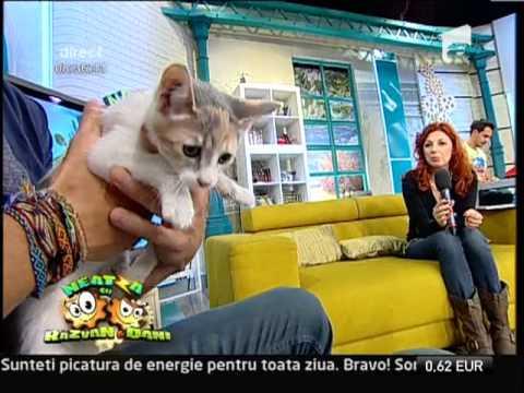 5. - Animale de companie - csrb.ro