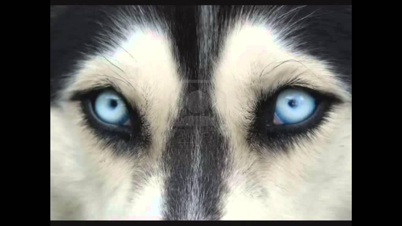 ojos de perro papiloma intraductal dor