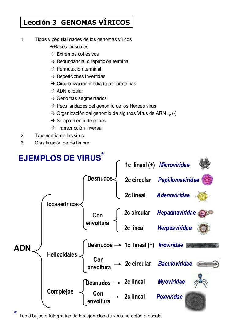 Papillomaviridae clasificacion Is a papilloma a tumor