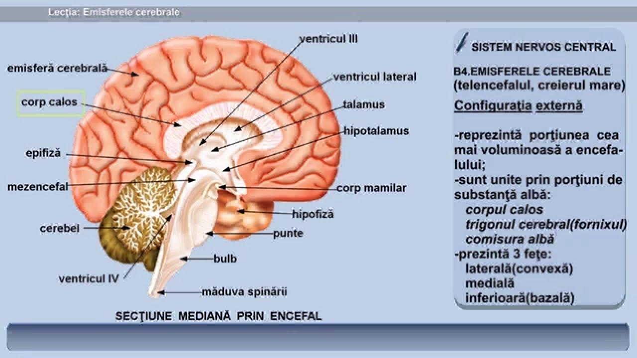 parazitoza cerebrala condilomii trec