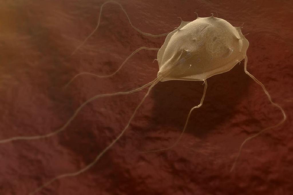 pinworms cum să aducă