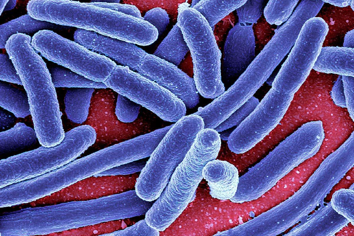 papilom pe tratamentul corpului uman human papillomavirus symptoms in mouth