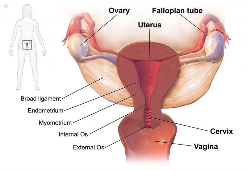 cum să tratezi HPV la femei