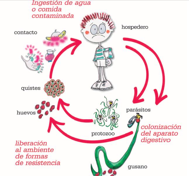 Alimente care ucid oxiuri - Articole Oxiuros bebe Bebe vermes oxiuros