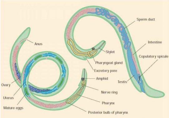 papilom intraductal b3