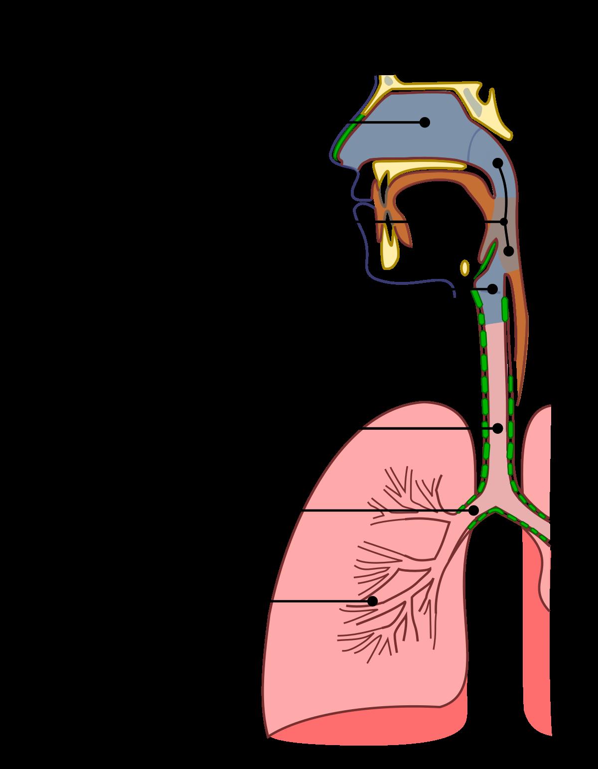 human papilloma virus adalah penyebab penyakit papilloma sintomi e segni