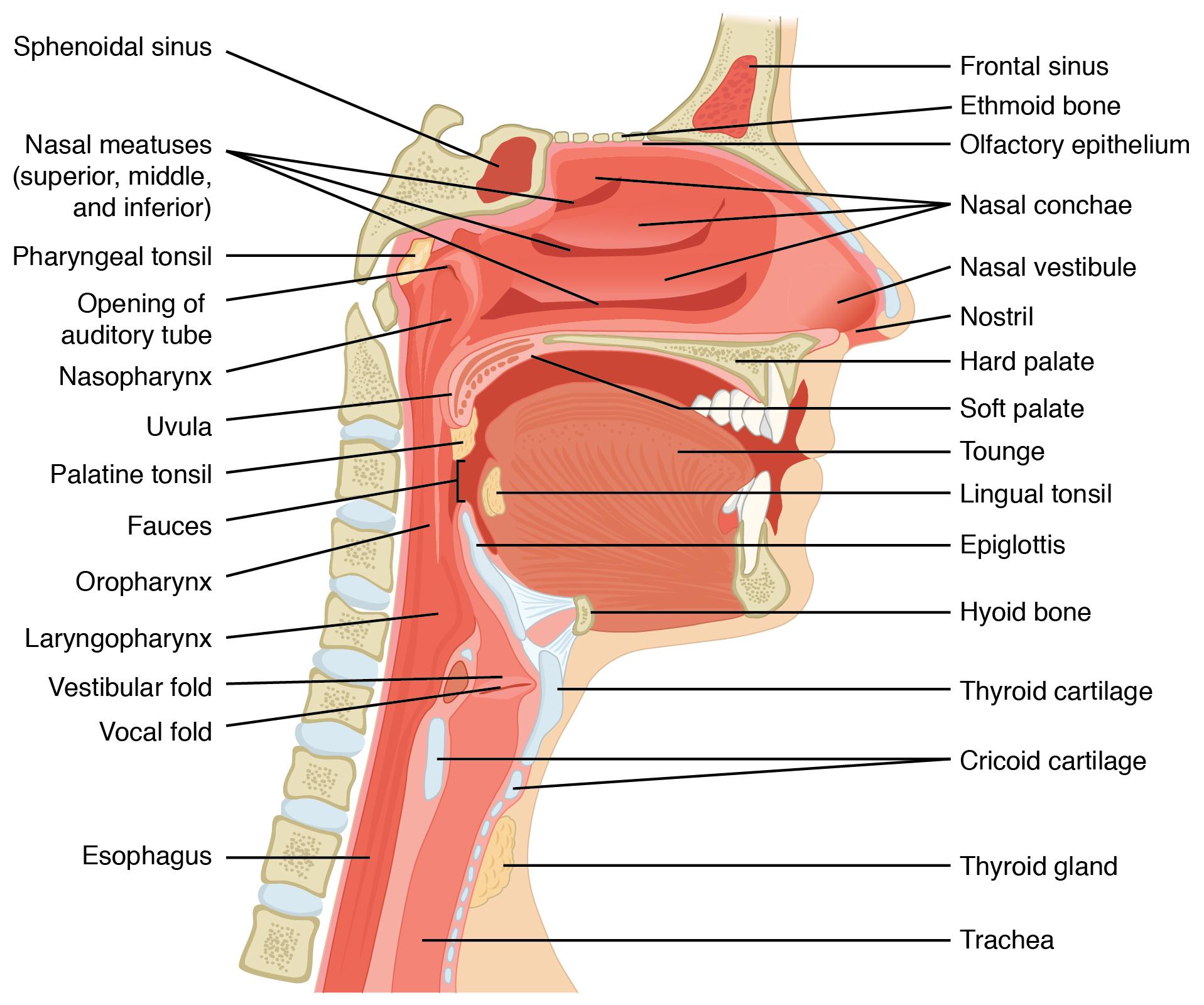 tratamentul viermilor ochiului uman tratament pentru prezența viermilor la om