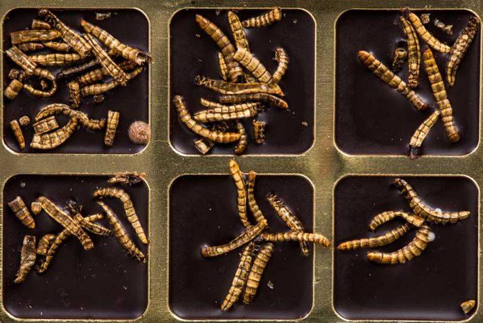 viermișori intestinali