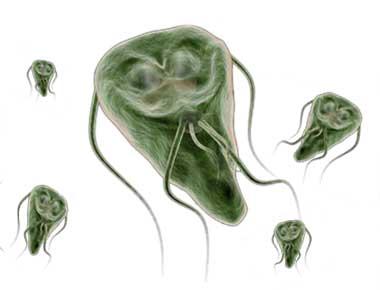 Giardia mensch. Oxiuros en ninos de dos anos Papilloma virus ascus