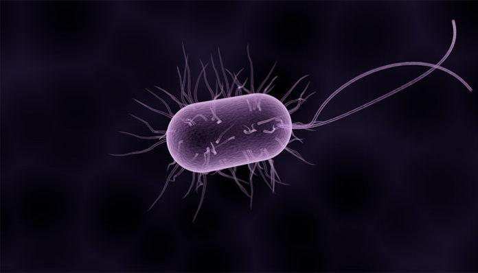 Paraziti u jetri simptomi
