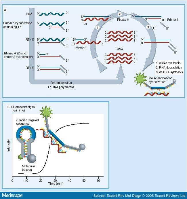 definition du papillomavirus humain