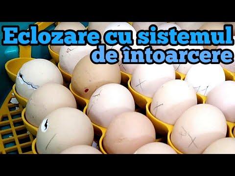 ce fac ouă viermii