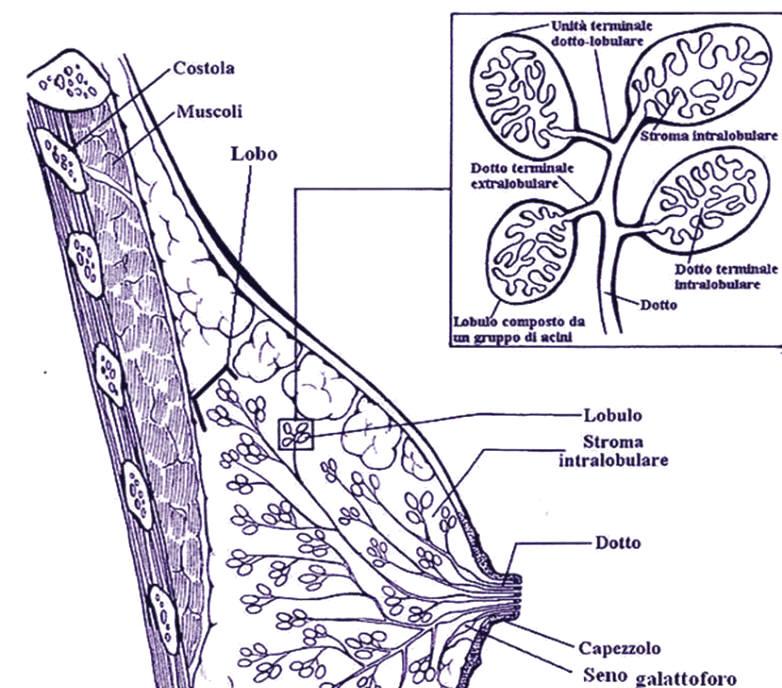 papiloma en la entrada del ano viermii sunt plate la om