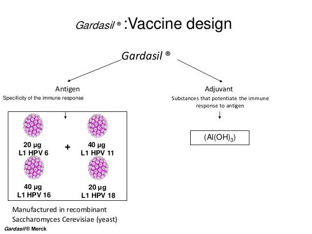 Vaccinazione papilloma virus torino, Vaccino papilloma virus adulti torino