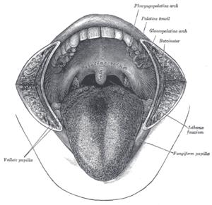 condiloame pe partea laterală a limbii