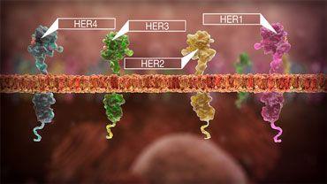 Un nou test poate determina care este cel mai eficient tratament pentru cancerul de san   Medlife
