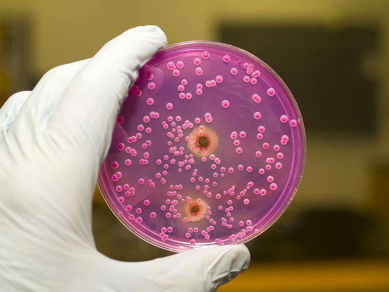 parazitii candida se vindeca