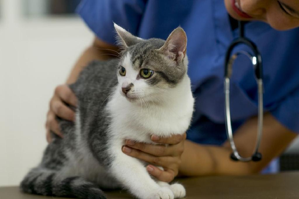 giardia în tratamentul pisicilor metode pentru detectarea paraziților în corpul uman