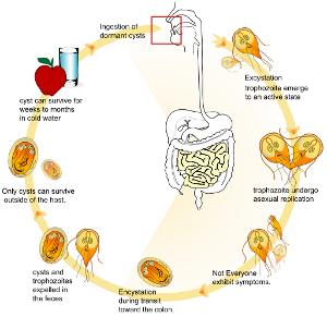 papilloma in the bladder medicamente pentru viermi pe baza evaluării viermilor