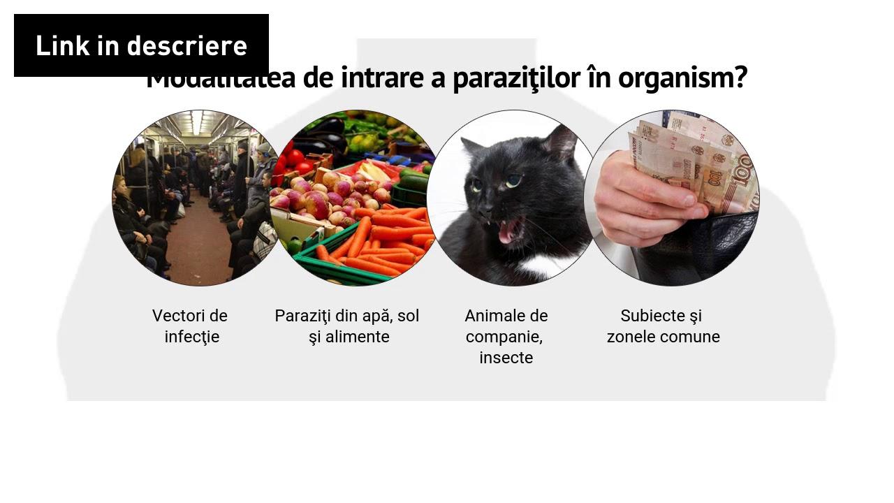 efectele benefice ale paraziților detoxifiere rinichi natural