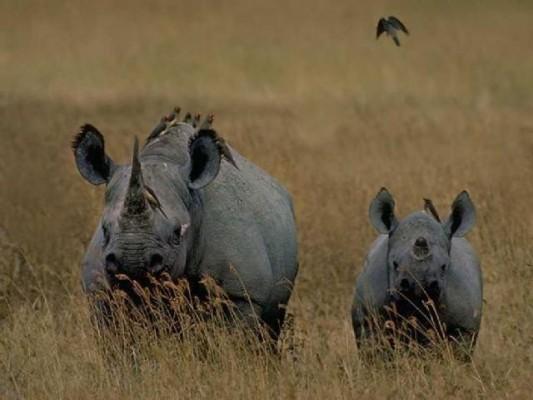 Animale din Africa - Engleză Vocabular - csrb.ro