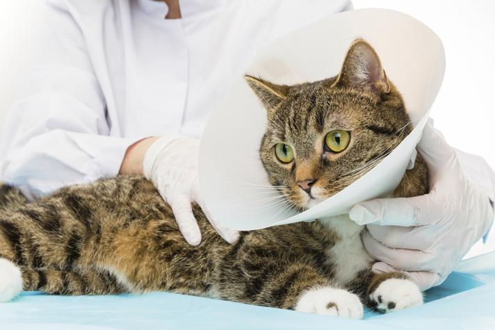 giardia în tratamentul pisicilor negii provoacă mâncărime