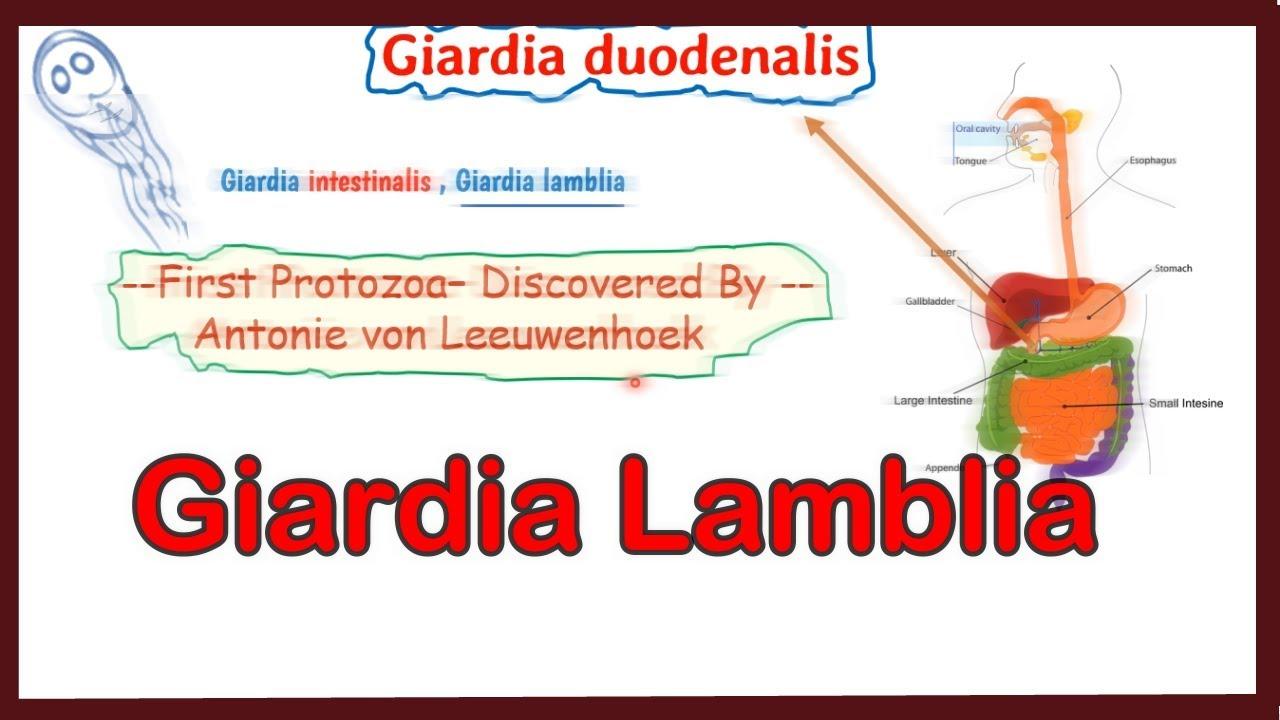 ciclu de viață al protozoarelor giardiei