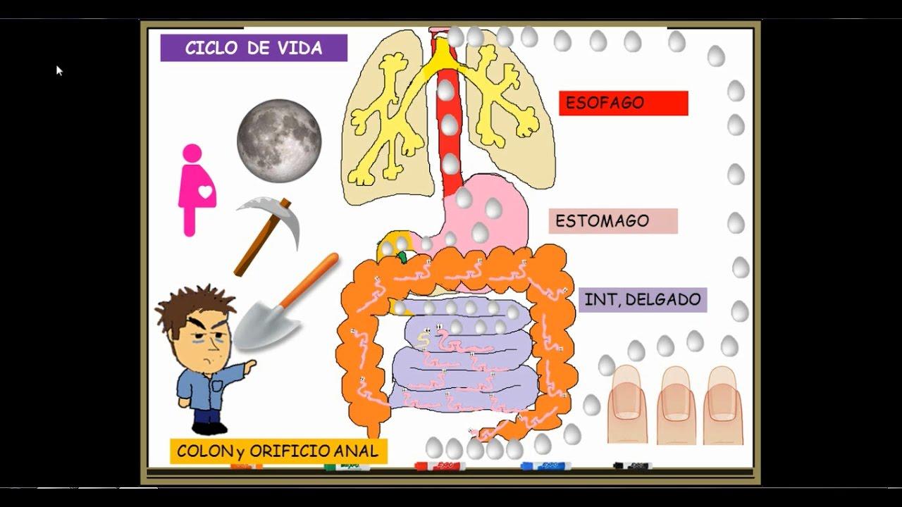 Enterobiasis baby