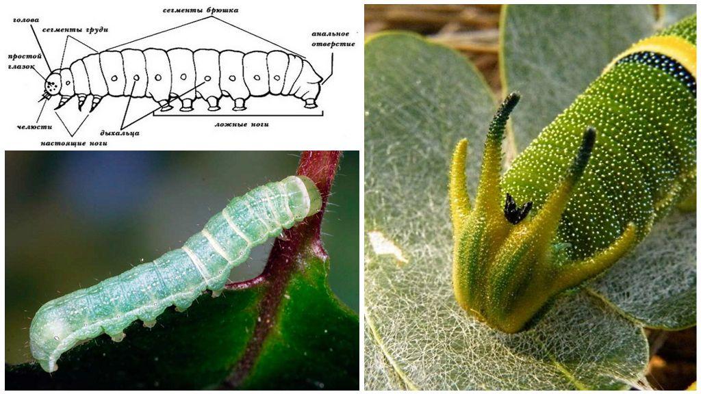 dysbiosis and allergies condylomata acuminata gardasil