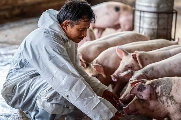Venin de porc porcine Dureri abdominale după pastile de vierme