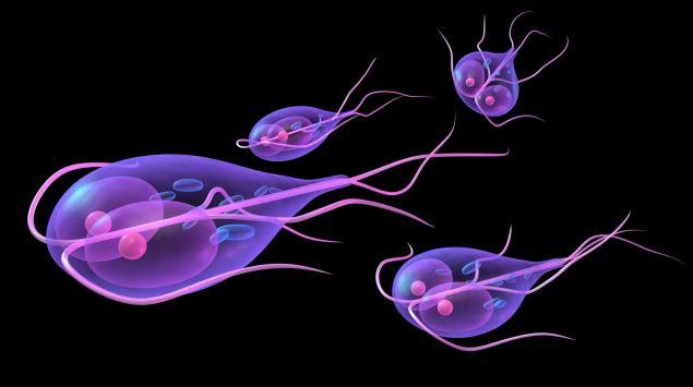 Parazitoza dex. parazitoză - definiție și paradigmă | dexonline
