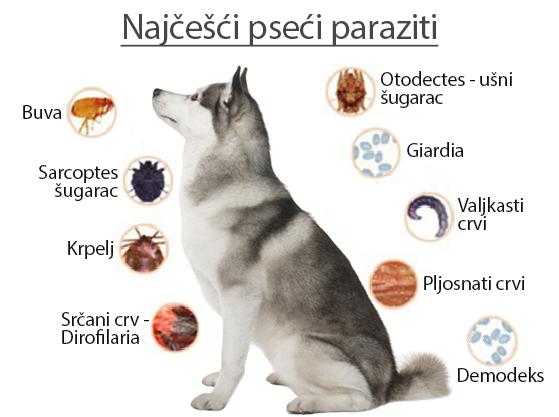 paraziti u crijevima pasa