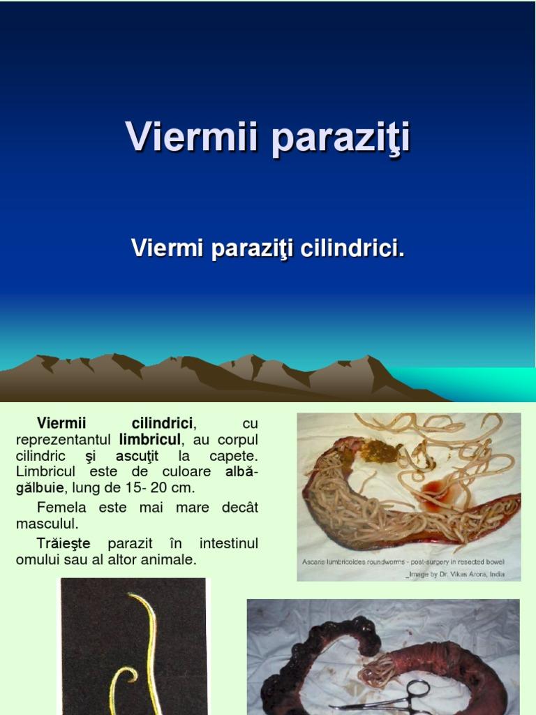 simptomele paraziților în tratamentul corpului uman human papillomavirus and herpes