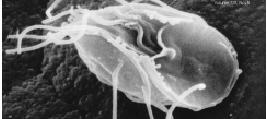 cum să tratezi viermii în scaun mouth warts cure