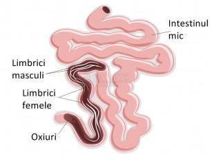 în patogeneza giardiozei