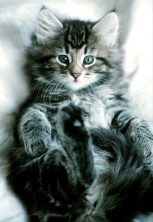 Deparazitarea interna la pisici – in ce consta si cat de importanta este pentru sanatatea pufosilor
