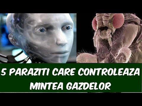 parazit eficient pentru toți paraziții