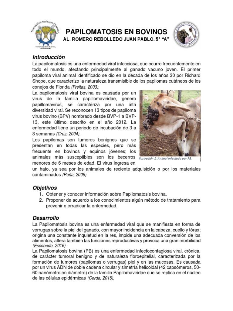 papilomatosis bovinos tratamiento