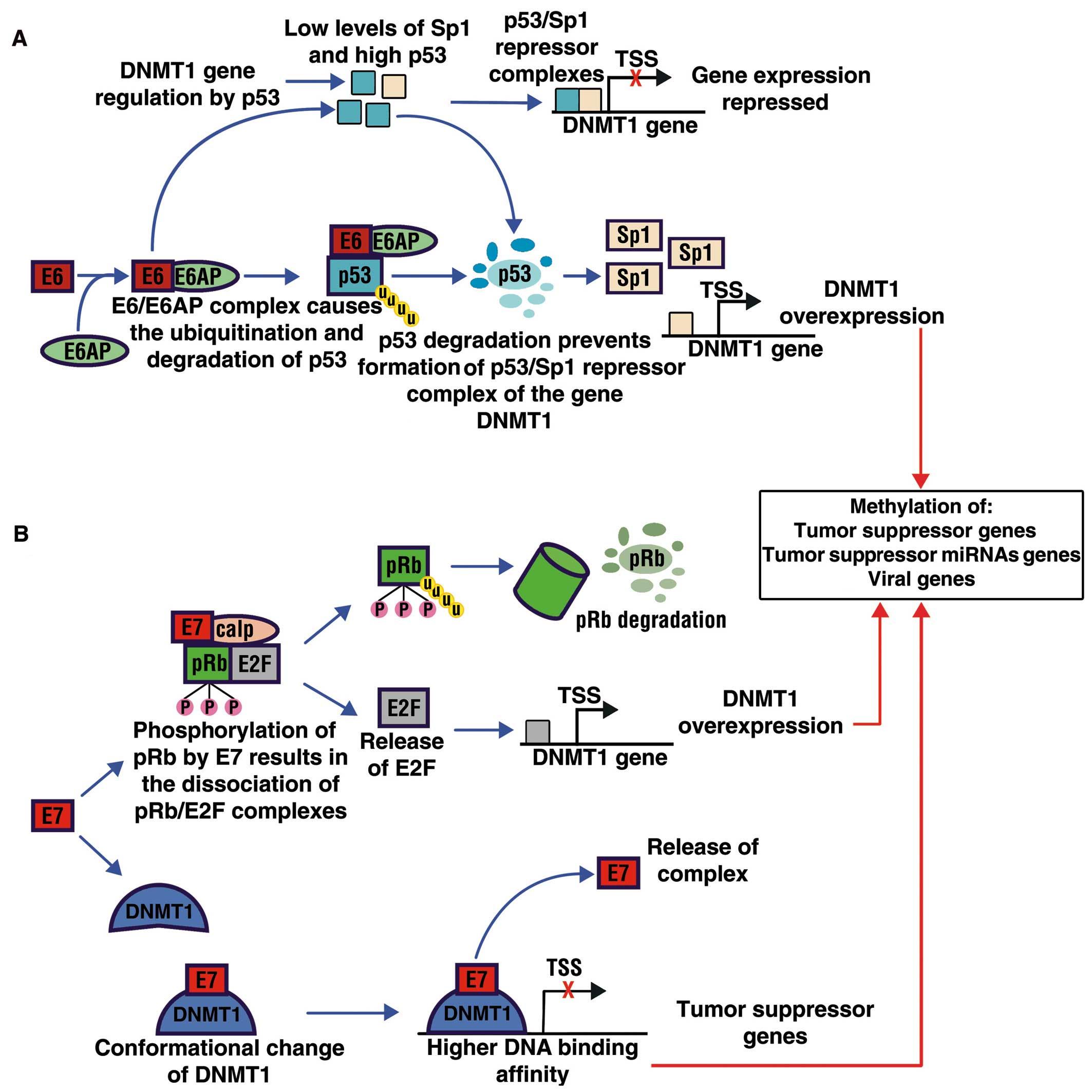 hpv cancer genetic tratarea viermilor pentru degradarea lor