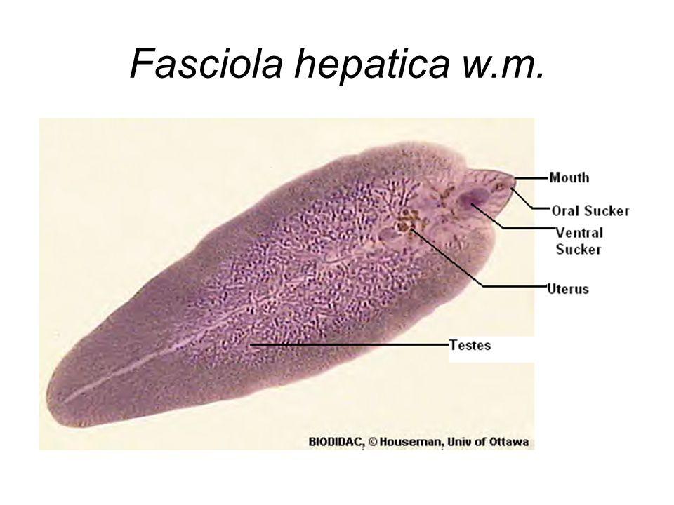 papilloma virus argento colloidale