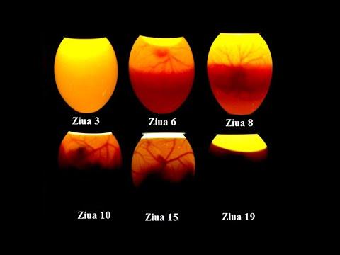 Metode de cercetare a oului de helmint