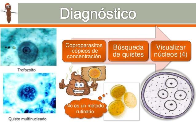 Levamisol de la viermi cât este recenzii, Enterobius vermicularis diagnostico laboratorial