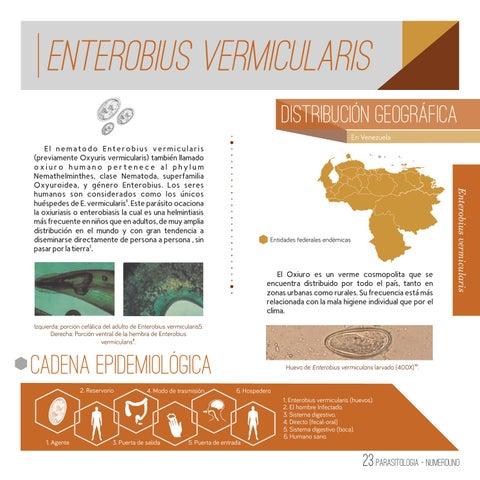 Enterobius vermicularis reservorio. Enterobius vermicularis respiratory papillomatosis images