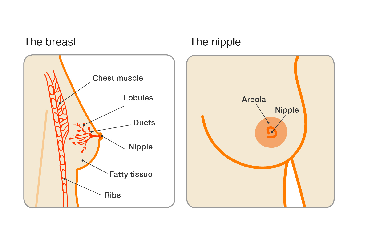papillomas during pregnancy tokareva n cadou pentru paraziți distructivi
